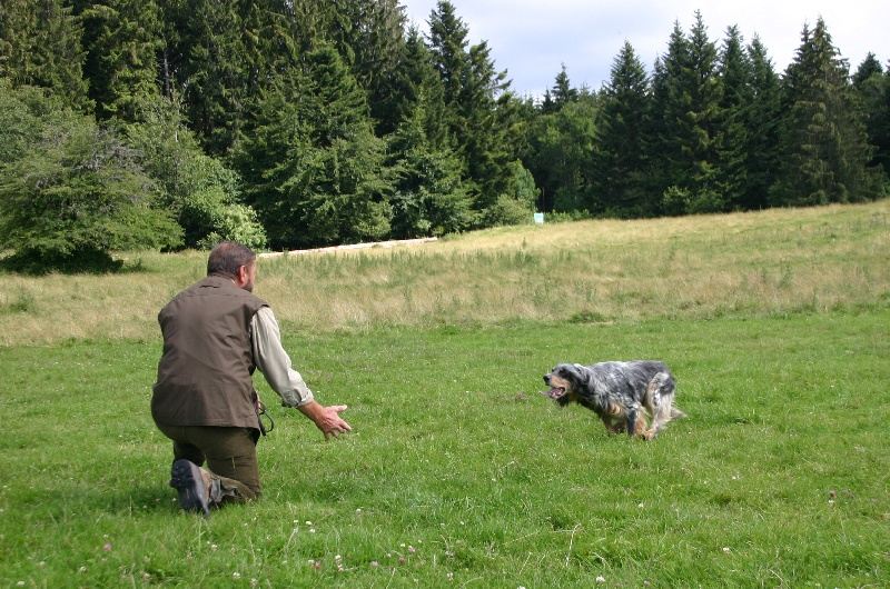 Elevage de la Diane du Drouvenant - eleveur de chiens